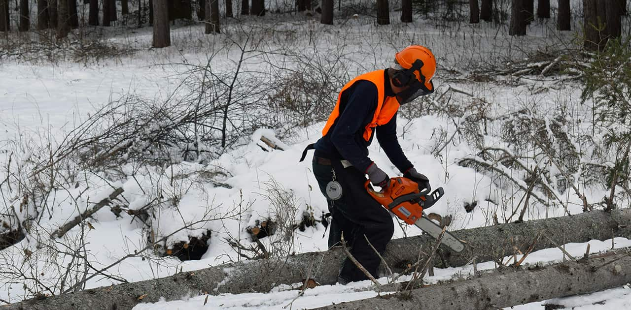 a UMFK forestry student uses a chainsaw in winter