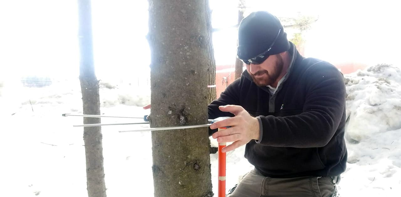 UMFK student assessing a tree