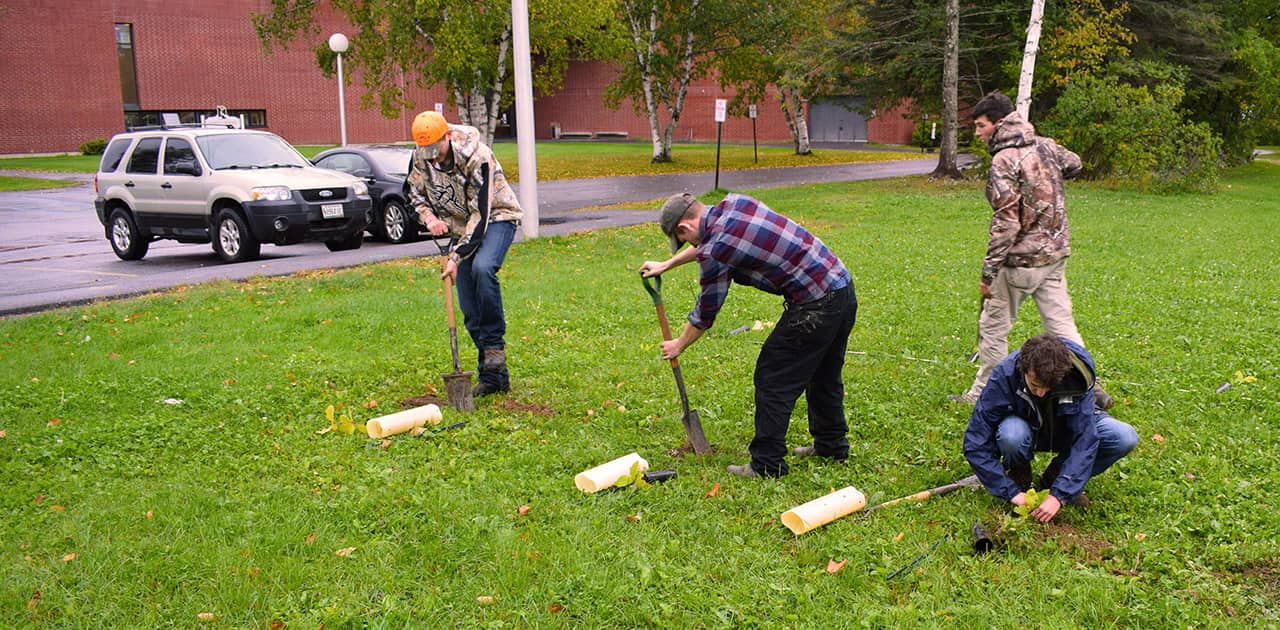 UMFK forestry students planting trees on the UMFK campus